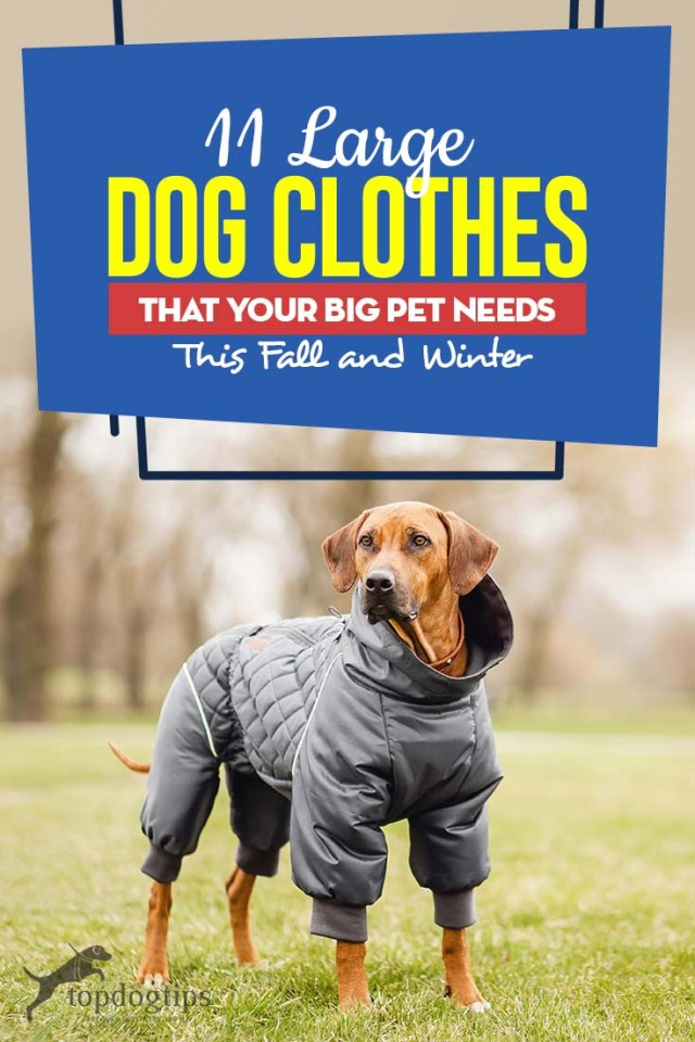 Top 11 Large Dog Clothes That Your Big Pet Needs This Fall and Winter