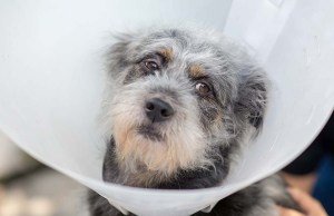 What Can I Give My Dog for Pain
