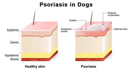 What is Dog Psoriasis