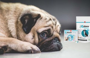 Zylkene for Dogs - A Brief Guide
