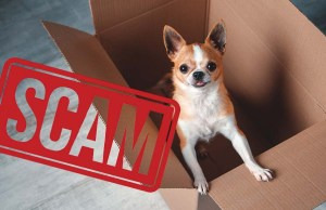 10 Signs of Puppy Scams (And How to Avoid Them)