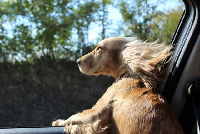 5 Ways You Can Solve Dog Car Anxiety