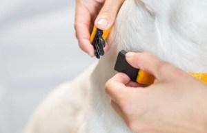 Best Safety Breakaway Dog Collar