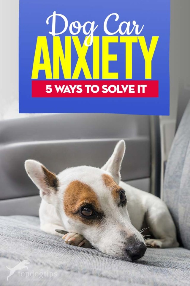 Dog Car Anxiety and the 5 Ways to Solve It
