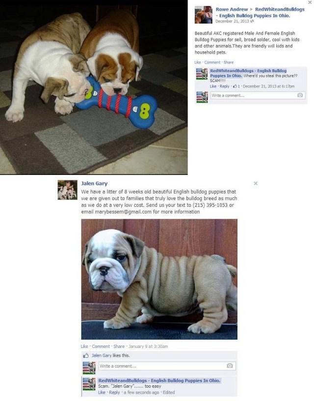 Facebook puppy scams