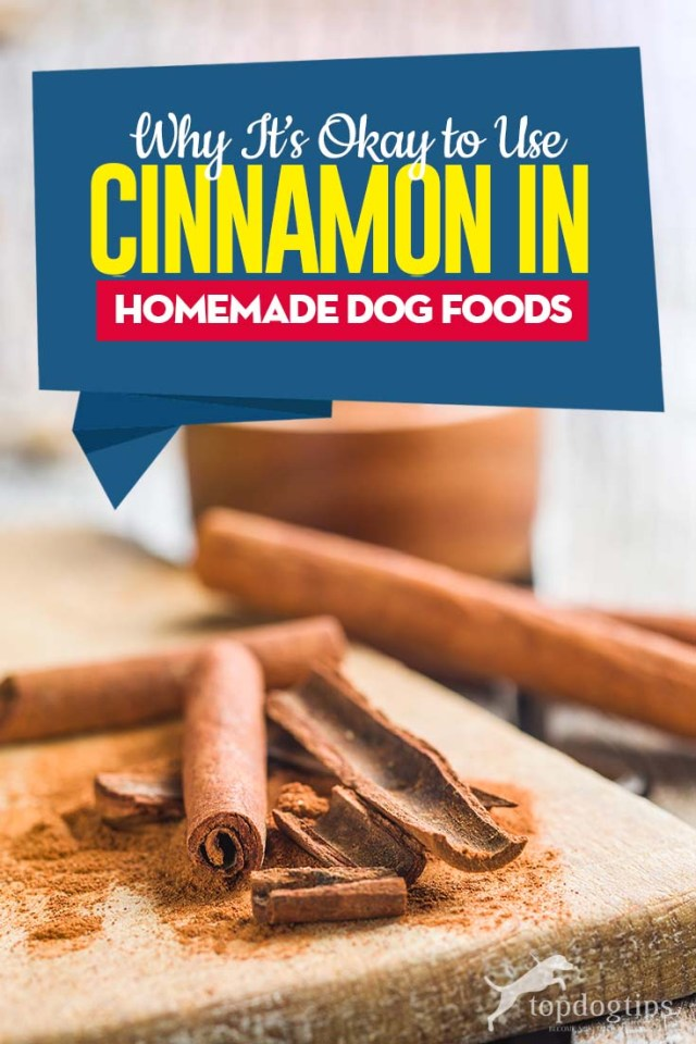 Guide on Cinnamon in Homemade Dog Food Recipes