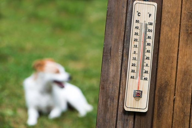Summer temperatures for dogs