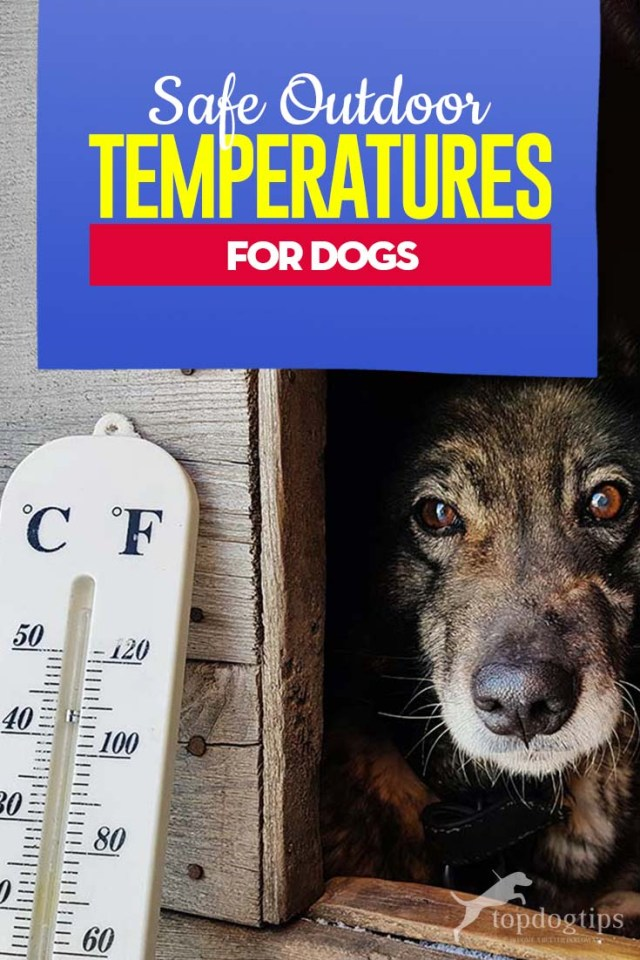 What Are Safe Outdoor Temperatures for Dogs