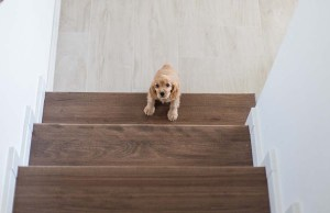 Dog Afraid of Stairs - Why and What To Do
