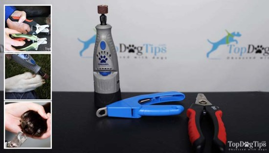 Dog Nail Grinder vs Clipper - Which Is Better