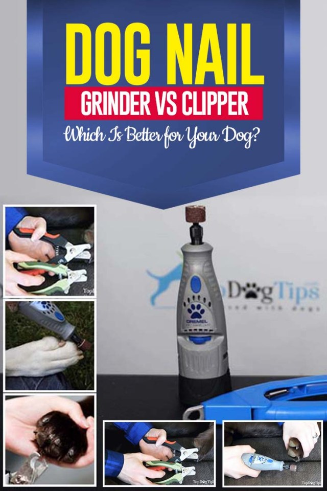 Guide on Dog Nail Grinder vs. Clipper - Which Is Better for Dogs