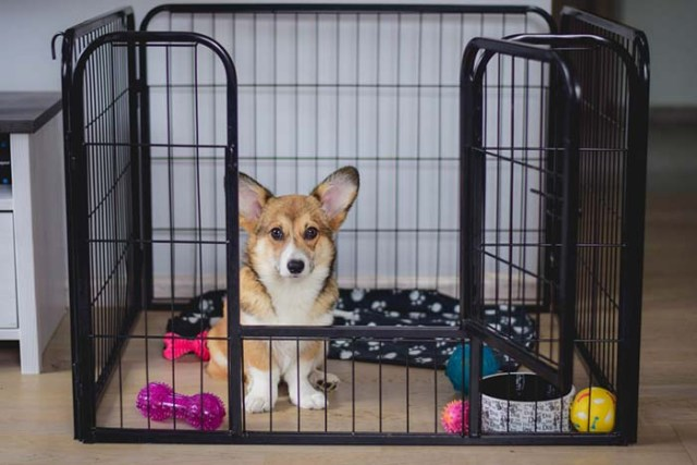 Schedule for Crate Training a Puppy
