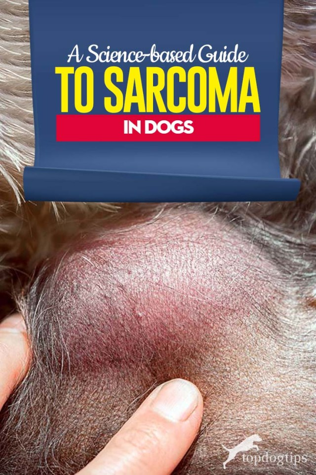 Science-based Guide to Sarcoma in Dogs