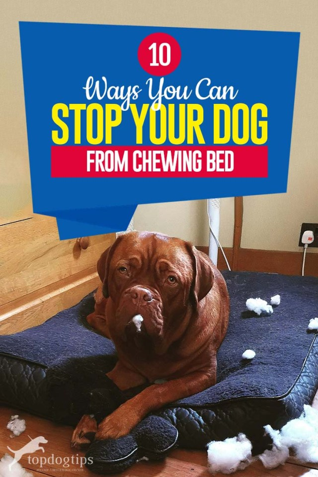 The 10 Ways to Stop Your Dog from Chewing Bed