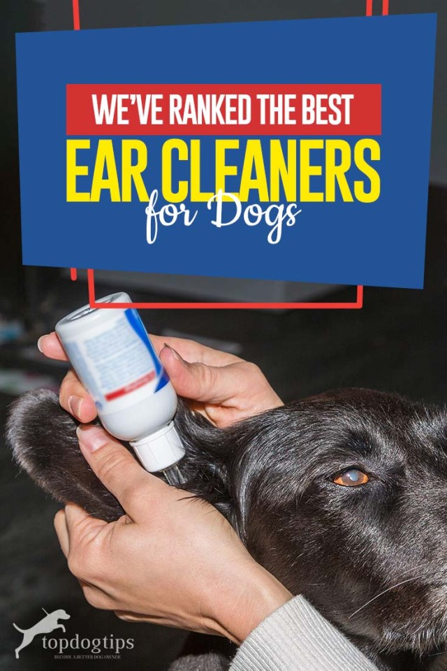 The Best Rated Ear Cleaners for Dogs 2020