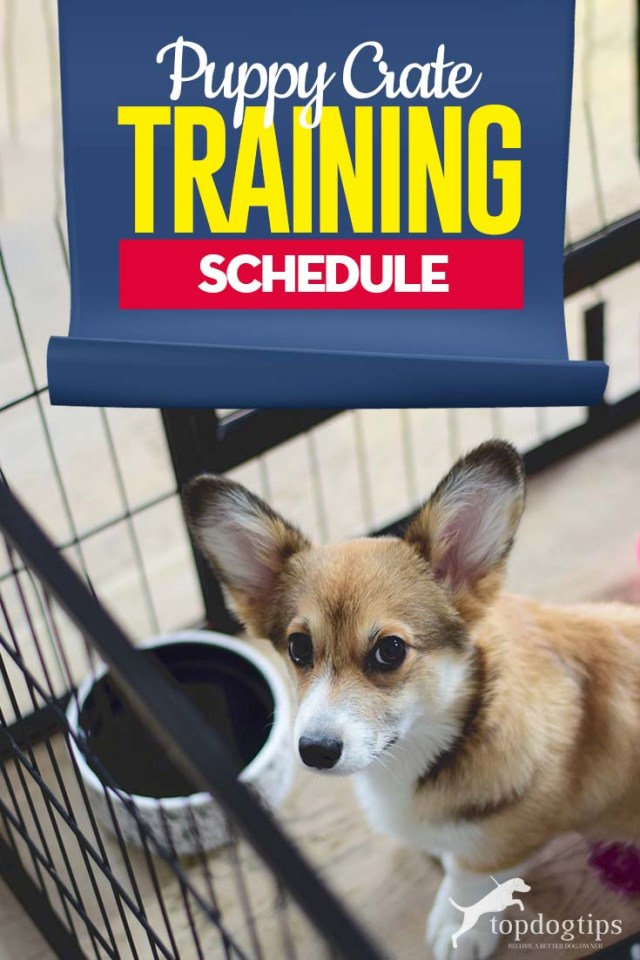 The Puppy Crate Training Schedule