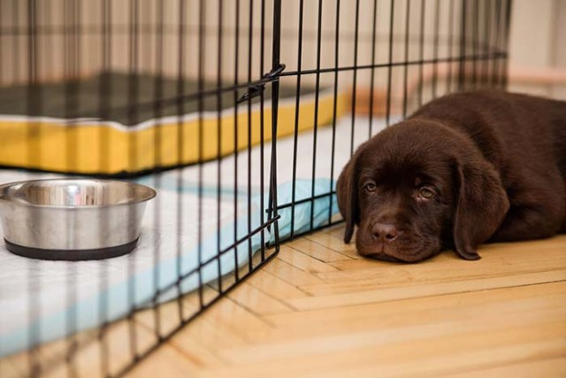 What to Do When Your Dog Whines In Crate
