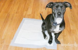 how to potty train a puppy on pads