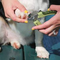Professional Stainless Steel Dog Nail Trimmer by Safari