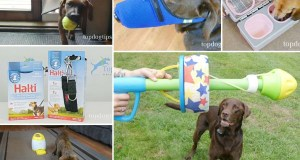 Best Dog Products 2019