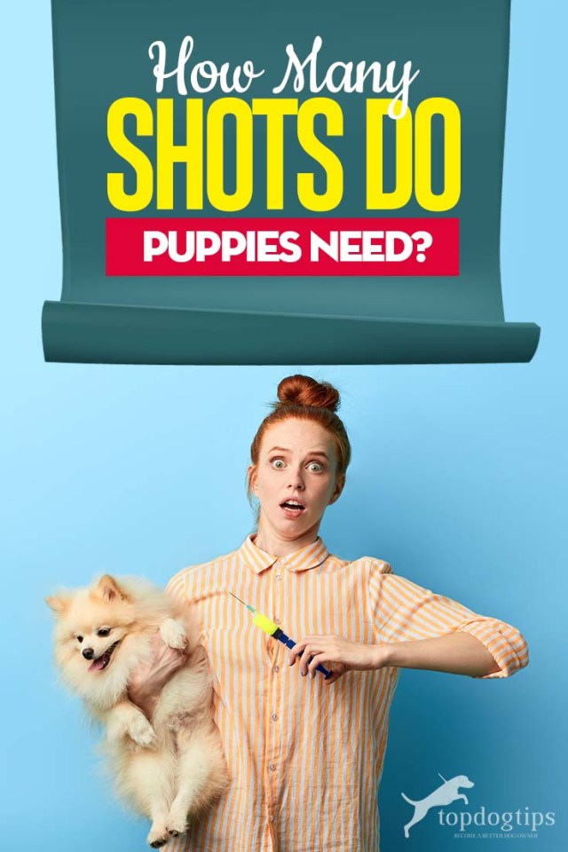 Guide on How Many Shots Do Puppies Need