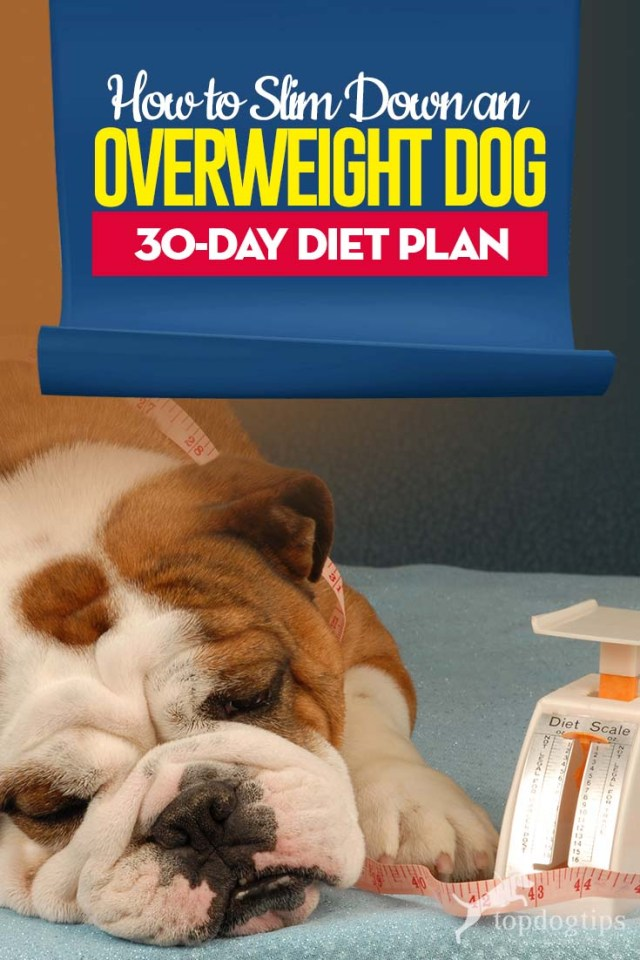 How to Slim Down an Overweight Dog (30-Day Diet Plan)