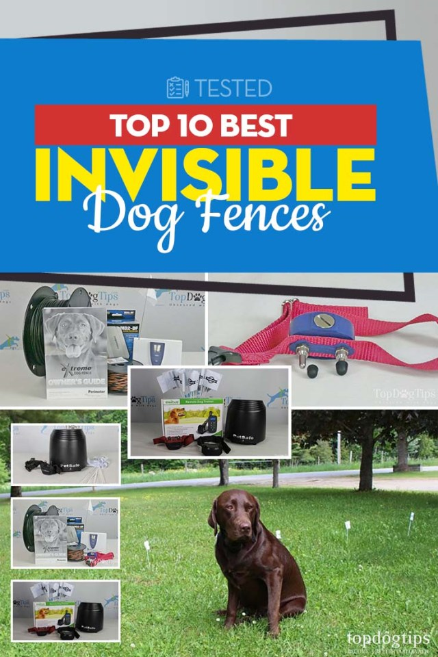 The 10 Best Invisible Dog Fences