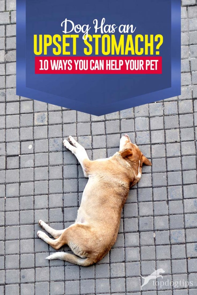 The 10 Ways to Help a Dog with Upset Stomach