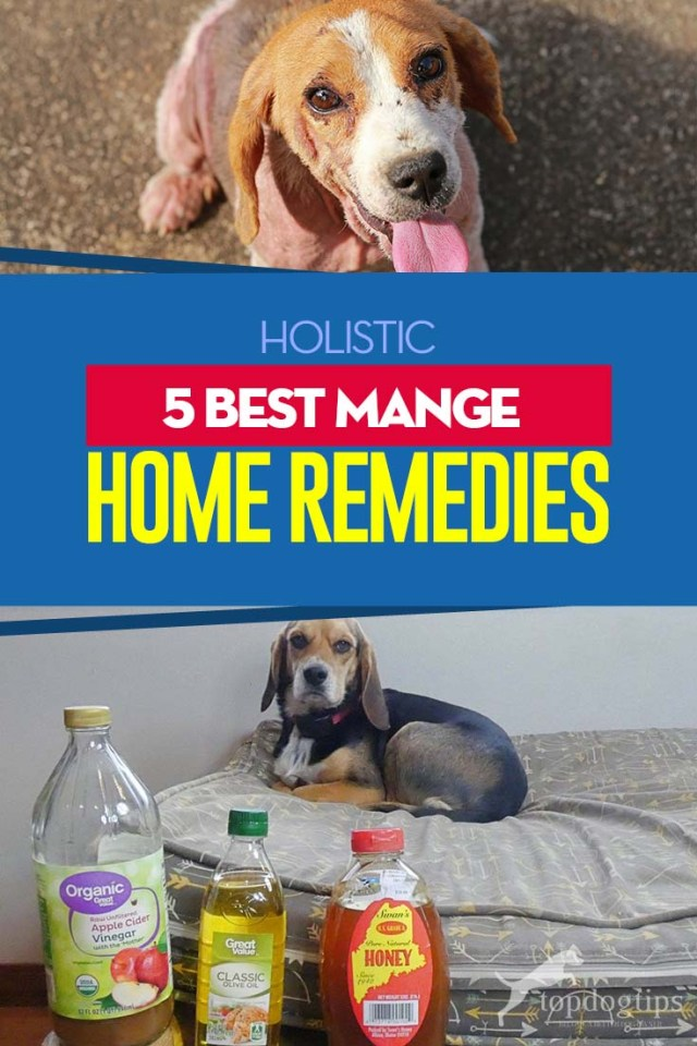 The 5 Best Dog Mange Home Remedies