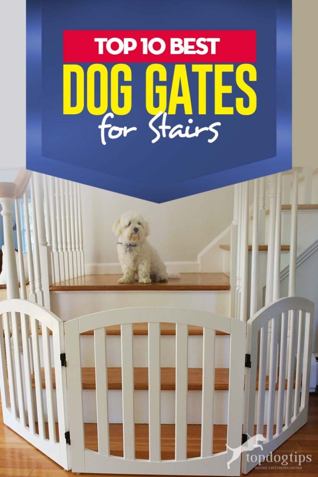 Top 10 Best Dog Gates for Stairs