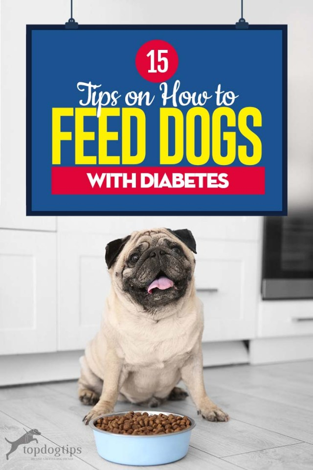 Top 15 Best Tips on How to Feed Dogs with Diabetes