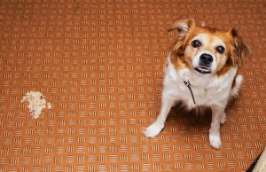 Dog Throwing Up White Foam - 11 Most Common Reasons Why