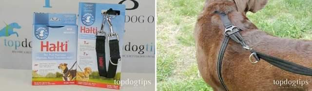 Halti Training Lead for Dogs