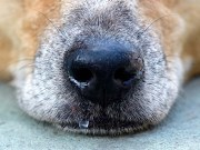 My Dog Has a Runny Nose - 5 Things You Can Do