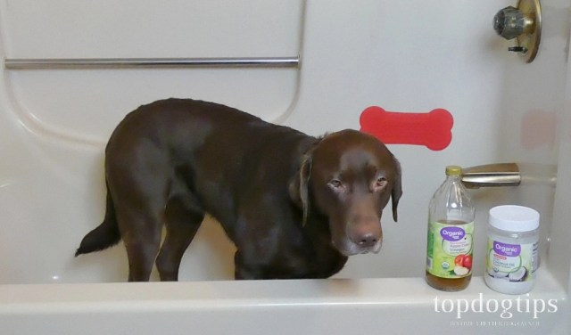 3 Dog Yeast Infection Home Remedy Treatments