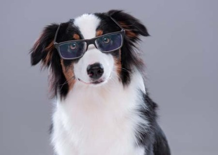 10 Things That Dogs Can See That You Can't See