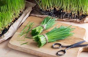 Wheatgrass for Dogs - Uses, Benefits and Side Effects