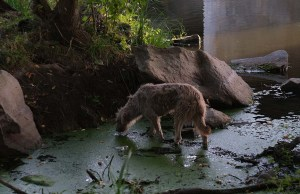5 Waterborne Illnesses Your Dog Can Contract From the Local Park