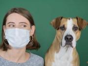 Can My Dog Contract Coronavirus (COVID-19) Podcast