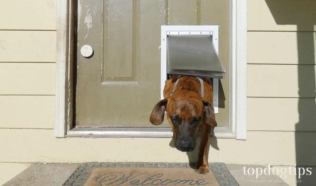 dog going through pet door
