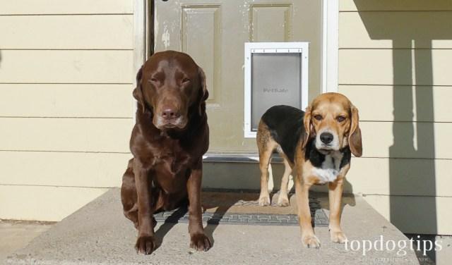 PetSafe Extreme Weather Dog Door Review