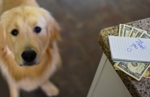 How Much to Tip a Dog Sitter