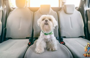 How to Restrain Dogs in Cars to Keep Them Safe