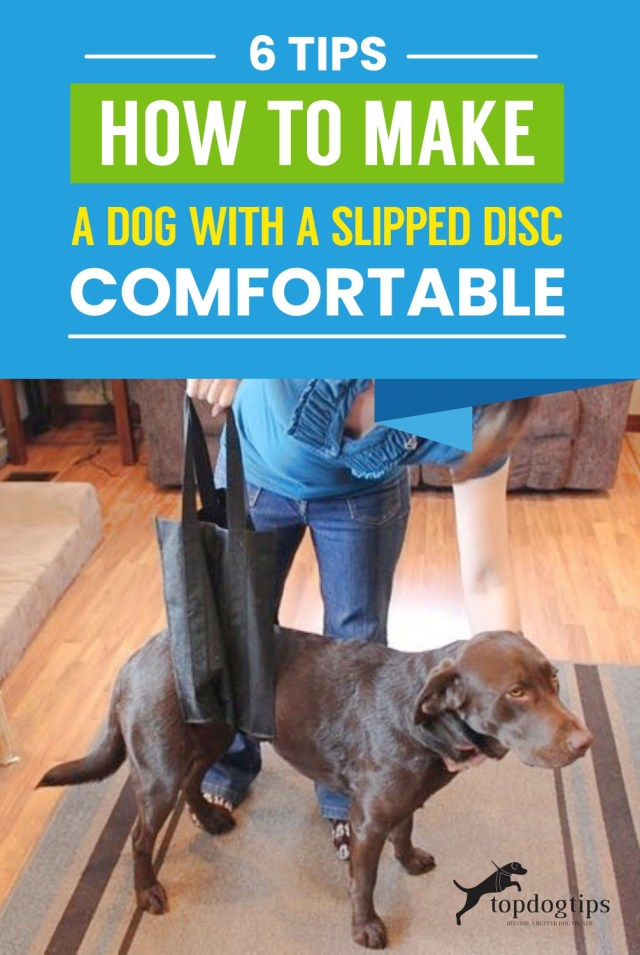 Dog with a Slipped Disc Comfortable