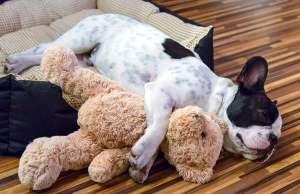 7 Tips on How to Make a Dog Sleep at Night