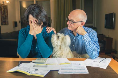 Can our finances cover the extra costs of caring for a dog