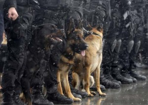 History of K-9 Officers (Police Dog Units)