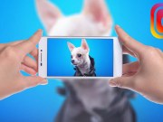 How to Make Your Dog Instagram Famous
