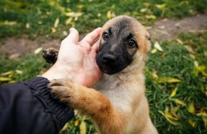 My Top 10 First Time Dog Owner Tips