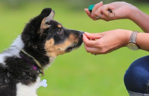 how much to tip dog trainers